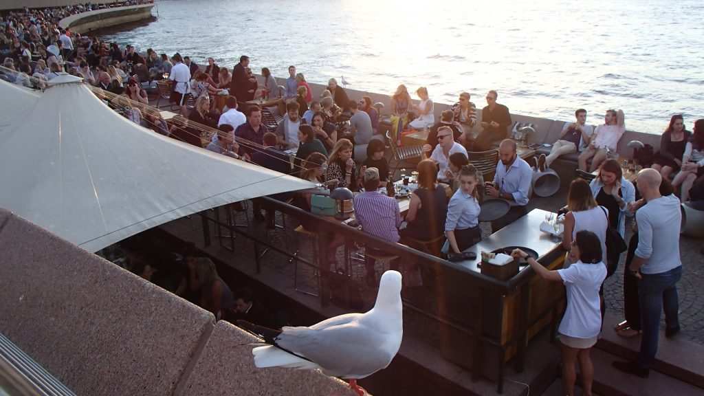 Sydney Harbor Drinks Crowd